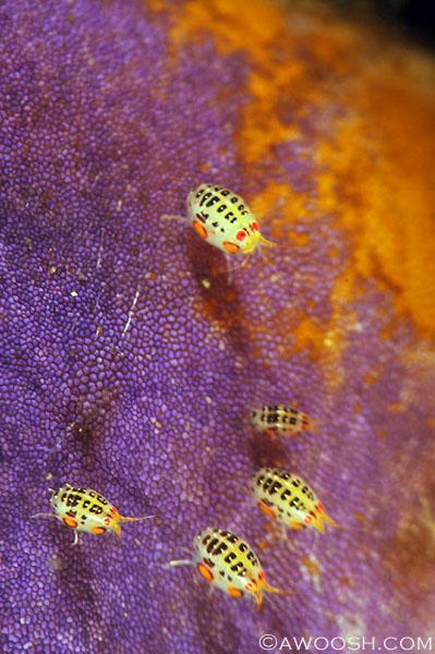 Awoosh.Images.Ladybugs