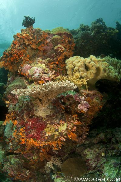 Awoosh.Wakatobi.House.Reef.2