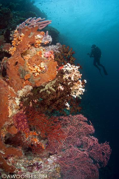 Awoosh.Wakatobi.House.Reef.3