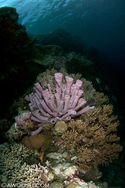 Awoosh.Wakatobi.House.Reef.5